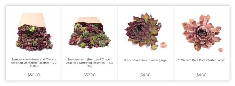 Succulent provider uses the above formula to derive very clear and descriptive names for their plants